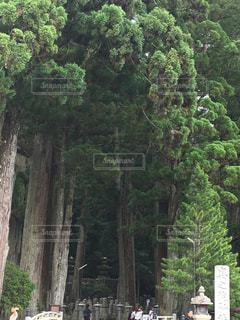 森の人々 のグループの写真・画像素材[766215]