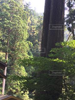フォレスト内のツリーの写真・画像素材[766228]