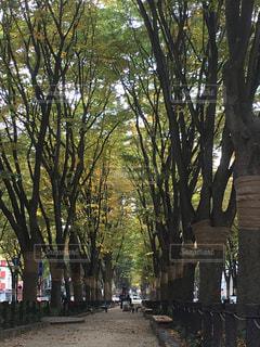フォレスト内のツリーの写真・画像素材[842224]