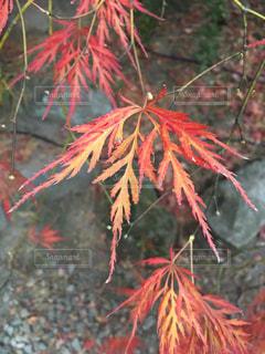 近くの木のアップの写真・画像素材[871001]
