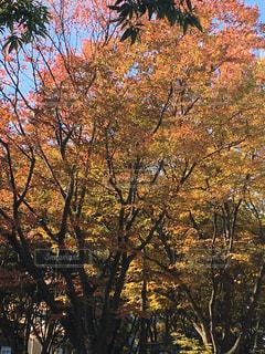 近くの木のアップの写真・画像素材[871004]