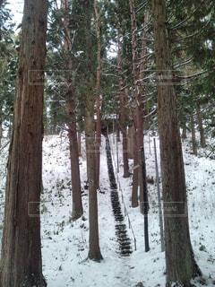 フォレスト内のツリーの写真・画像素材[963486]