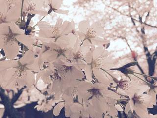 近くの花のアップの写真・画像素材[847029]