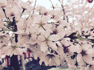 近くの花のアップの写真・画像素材[847040]
