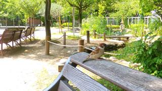 公園のベンチに止まるすずめの写真・画像素材[745763]