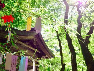近くの木のアップの写真・画像素材[1287500]