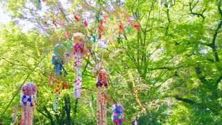 木の上に座っているカラフルな凧の写真・画像素材[1289185]