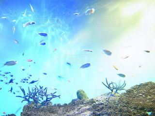 海の写真・画像素材[1313872]