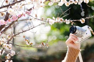 木の枝にとまる小鳥の写真・画像素材[1843469]