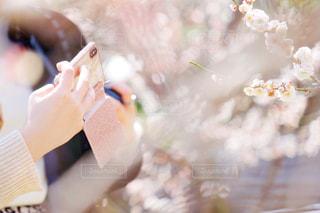 花を撮る手の写真・画像素材[2288080]