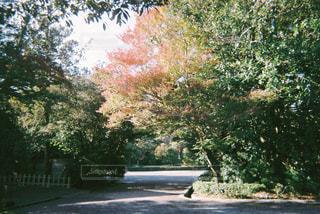 自然,紅葉,木,緑,晴れ,樹木,癒し,朝,フィルム,雰囲気,伊勢,自然光,日中,フィルム写真,フィルムフォト
