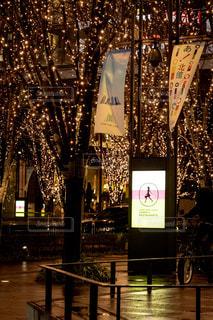 大阪,樹木,イルミネーション,照明,明るい,グランフロント,アンバサダー
