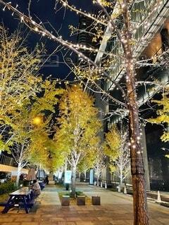 イルミネーション,クリスマス,グランフロント大阪