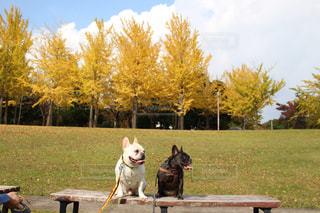 公園のベンチに座っている犬の写真・画像素材[874767]
