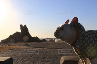 戌年なので犬と犬岩の写真・画像素材[949177]