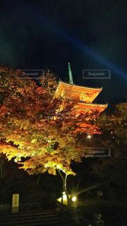 秋,清水寺,紅葉,京都,綺麗,観光,ライトアップ,観光スポット,京都旅