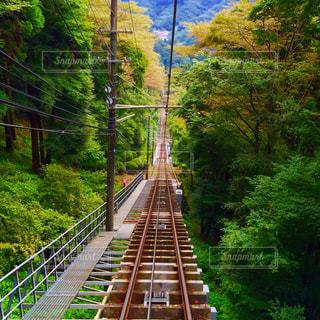 下り列車を走行する列車は森の近く追跡します。 - No.765935