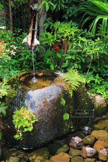 夏,水,散歩,清涼,夏バテ,熱中症予防
