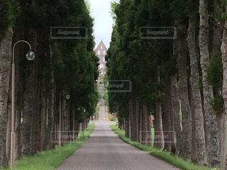 道の端に木のパスの写真・画像素材[886666]