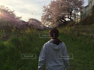 春の夕陽の写真・画像素材[890546]