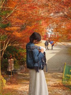 秋日和の写真・画像素材[779890]
