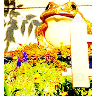 カエルちゃんがお出迎えの写真・画像素材[752755]