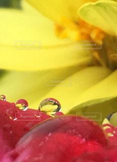 近くの花のアップの写真・画像素材[826593]