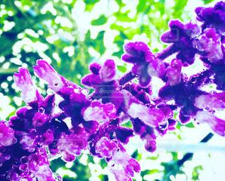 近くに紫の花のアップの写真・画像素材[826604]