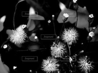 花の写真・画像素材[829804]