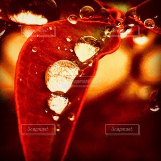 近くに赤い光のアップの写真・画像素材[890033]