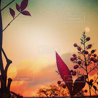 日没の前に凧の写真・画像素材[955605]