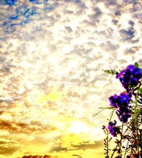 紫色の花一杯の花瓶の写真・画像素材[965099]
