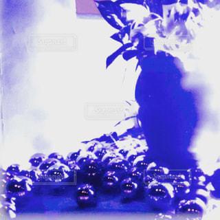 近くの花のアップの写真・画像素材[1070790]