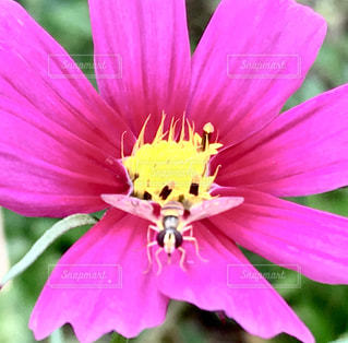 近くの花のアップの写真・画像素材[1077488]