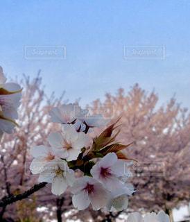 近くの花のアップの写真・画像素材[1099068]
