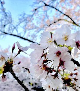 近くの花のアップの写真・画像素材[1101062]