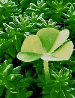 近くの花のアップの写真・画像素材[1112023]