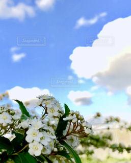 近くの花のアップの写真・画像素材[1133530]