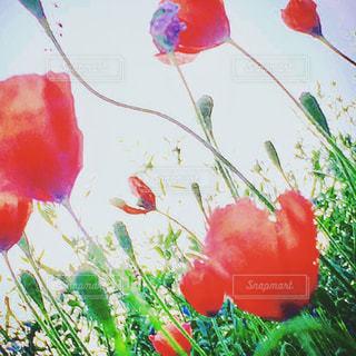 緑の葉と赤い花の写真・画像素材[1158029]