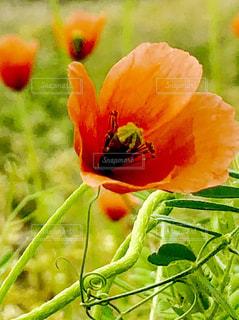 近くの花のアップの写真・画像素材[1158172]