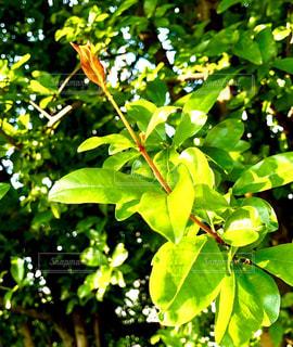 植物の木の成長の写真・画像素材[1163113]