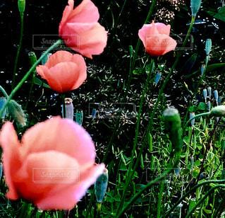 近くの花のアップの写真・画像素材[1163385]