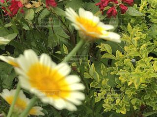 近くの花のアップの写真・画像素材[1169195]