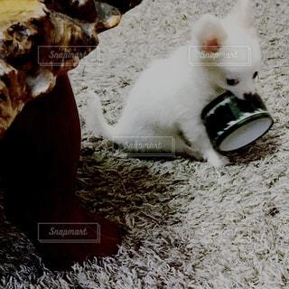 部屋の中で遊ぶの写真・画像素材[1214503]