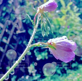 近くの花のアップの写真・画像素材[1217902]