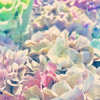 近くに珊瑚のアップの写真・画像素材[1226839]