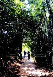森の人々 のグループの写真・画像素材[1230913]