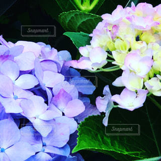 近くの花のアップの写真・画像素材[1236191]