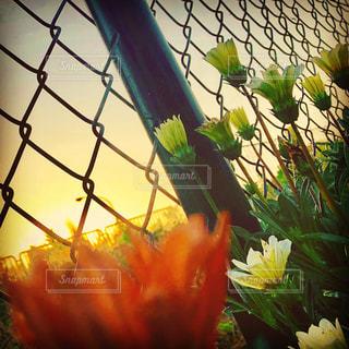 植物の花の花瓶の写真・画像素材[1249355]