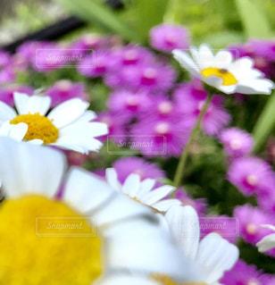 近くの花のアップの写真・画像素材[1251700]